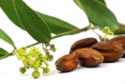 Simmondsia chinensis jojoba oil в косметике